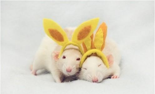 Фотосессия крысят отJessica Florence. Изображение № 2.