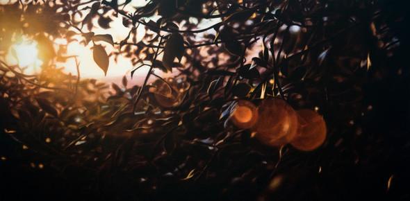 Художник Damian Loeb. Изображение №19.