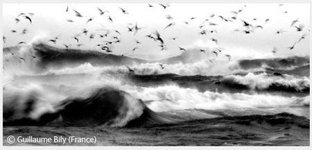 Победители Wildlife Photographer 2008. Изображение № 64.