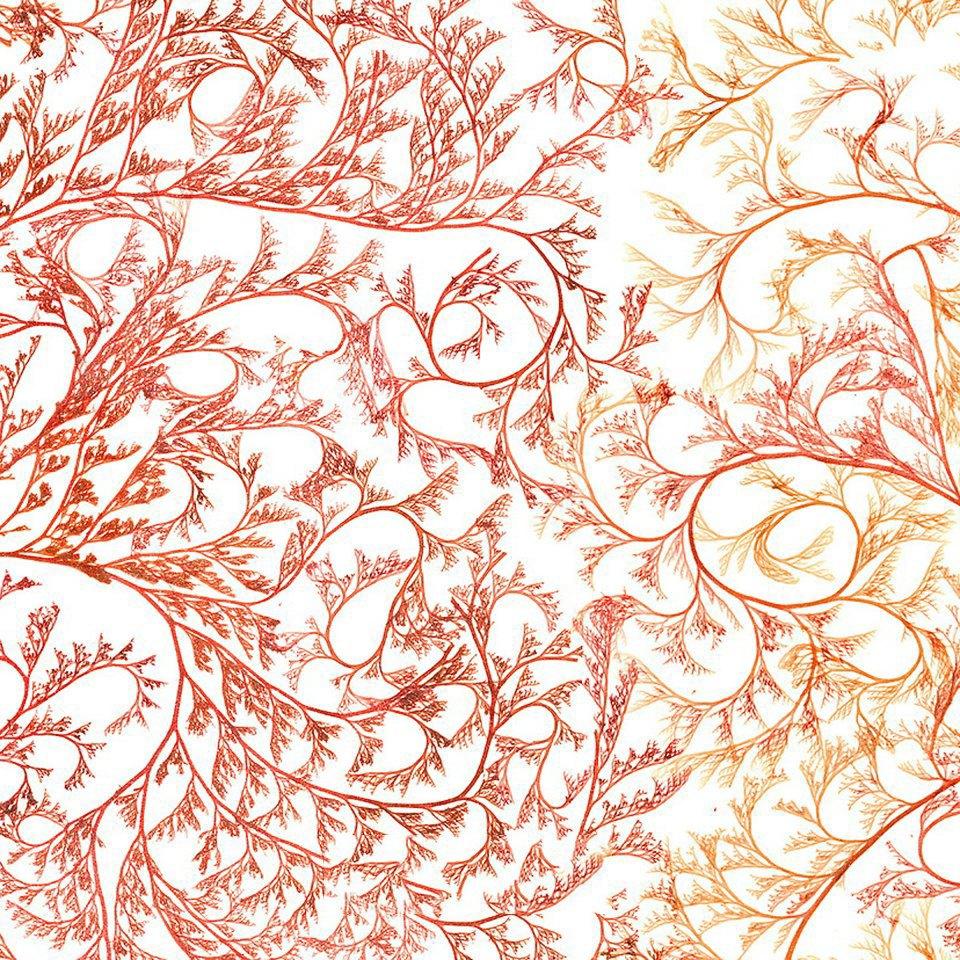 Морские водоросли, которые выглядят как инопланетные существа. Изображение № 9.
