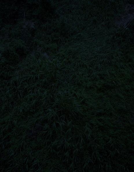 Темный лесКейты Сигиуры. Изображение № 12.