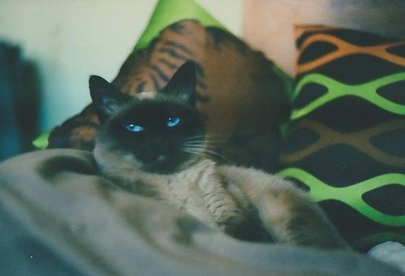 О кошках и подушках. Изображение № 5.
