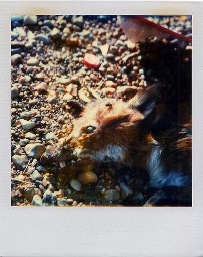 Animals Dead. Изображение № 6.