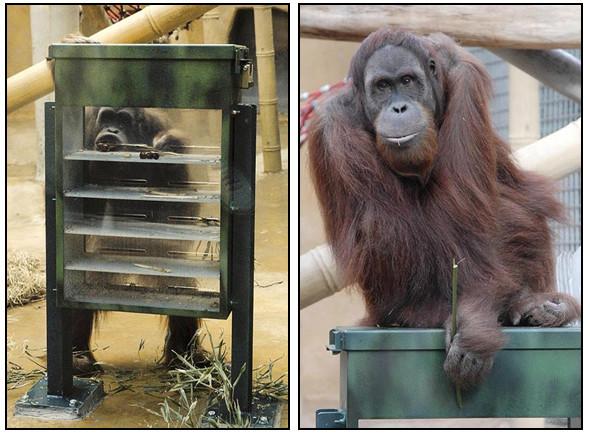 Орангутана-тест. Изображение № 3.