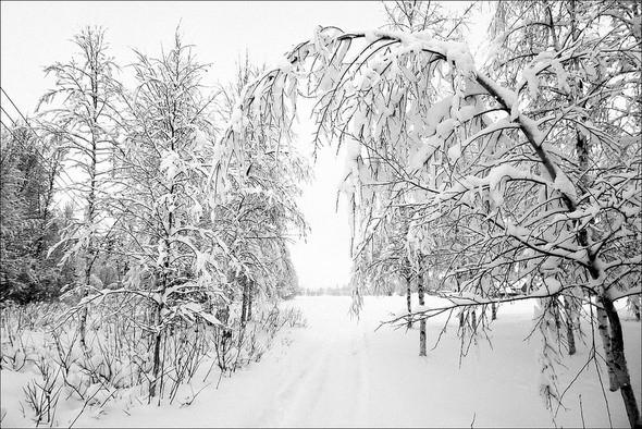 Изображение 31. Выходные в шведском лесу.. Изображение № 31.