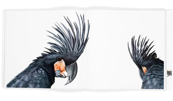 Божественные птицы Andrew Zuckerman. Изображение № 13.