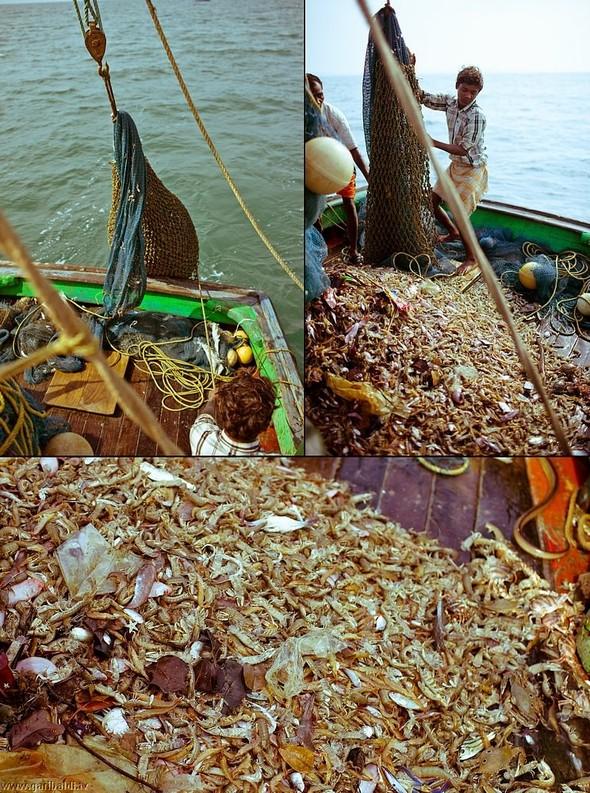 Shrimp boat MFR 646 DF GOA - Non stop. Изображение № 14.