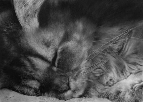 Paullung.и его коты. Изображение № 26.