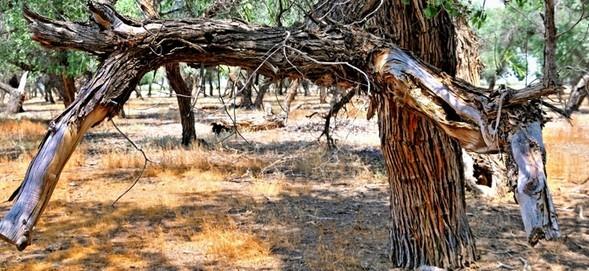 Treefilia. Изображение № 25.