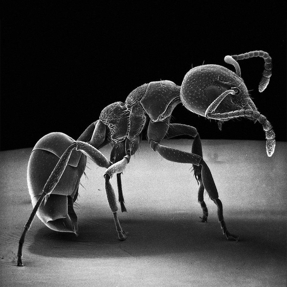 Как насекомые выглядят под микроскопом:  9 высокоточных изображений. Изображение № 8.