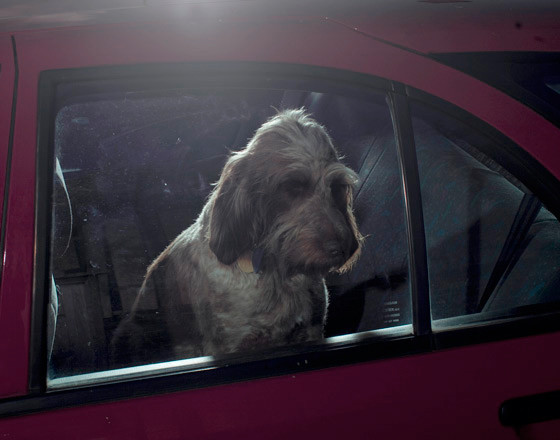 The silence of dogs in cars. Изображение № 14.