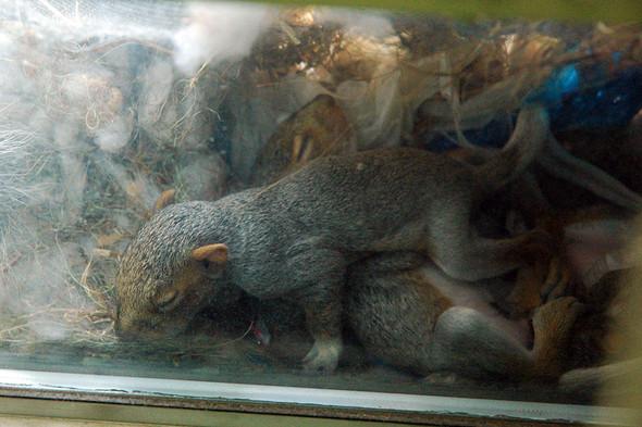 Белка в нашем окне. Изображение № 10.