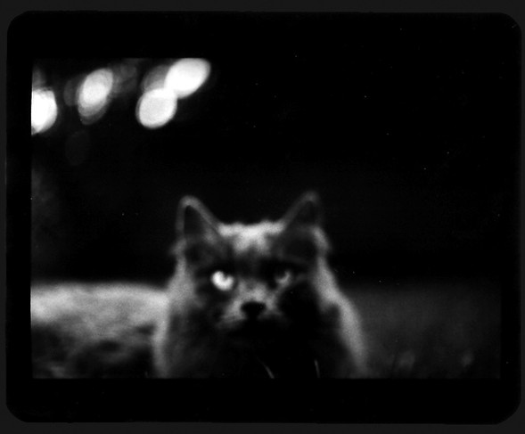 Джакомо Брунелли и«другие» животные. Изображение № 14.