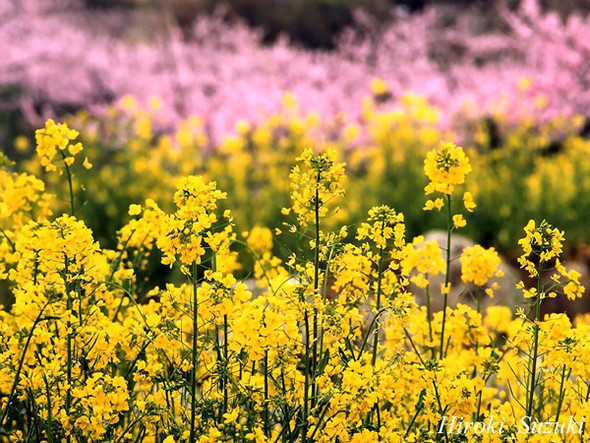 Весна идет! Создаем весеннее настроение. Изображение № 13.