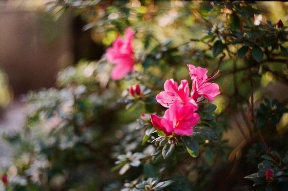 Прогулка по Ботаническому саду. Изображение № 10.