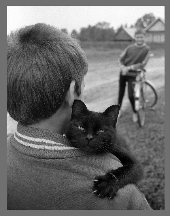 Блудливые коты. Изображение № 2.