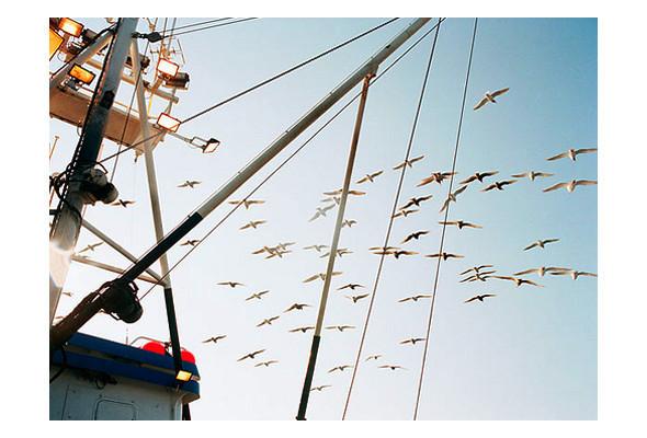 Фото-рыбалка Кори Арнольда. Изображение № 41.