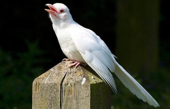 Животные-альбиносы. Изображение № 16.