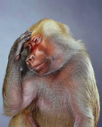"""Jill Greenberg """"Monkey portraits"""". Изображение № 21."""