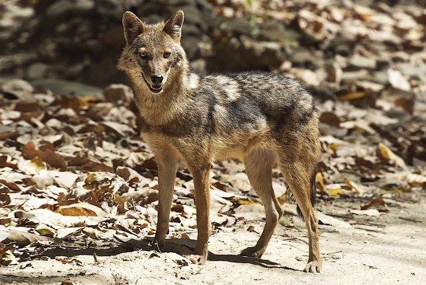 Как учёные находят новых животных: 10 недавно открытых видов. Изображение №3.