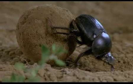 Microcosmos Lepeuple del'herbe (1996). Изображение № 7.