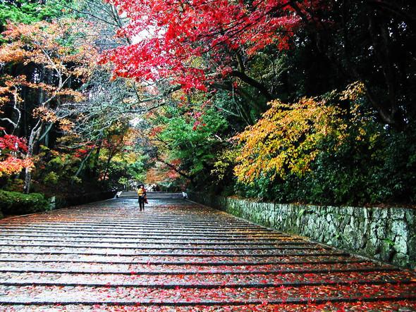 Тур в Японию и сколько это стоит!. Изображение № 2.