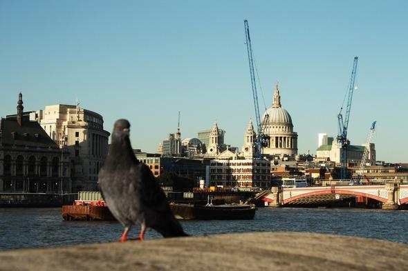 Творческий потанцевал Лондона. Изображение № 19.