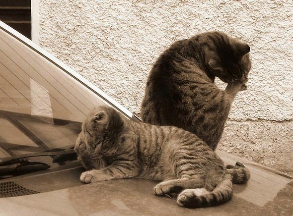 Котики и авто. Изображение № 8.