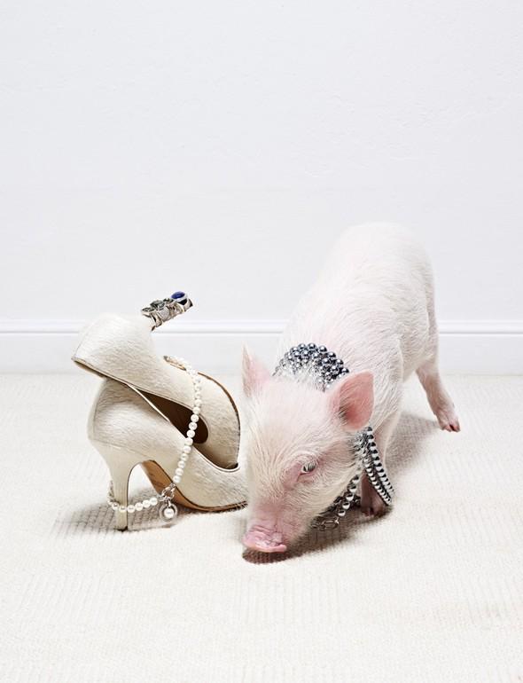 Съёмка: Животные в Viva! Moda. Изображение № 1.