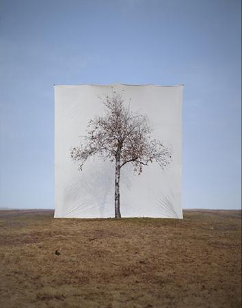 Myoung HoLee's Trees. Изображение № 2.