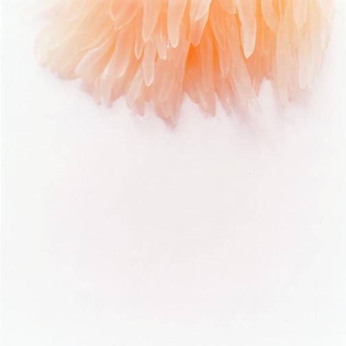 Трепет иТишина – Фотографии Нахо Куботы. Изображение № 1.