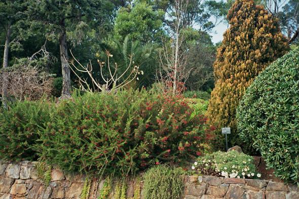 Ботанический сад. Изображение №59.