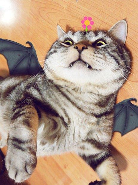 Котик косплеит супергероев. Изображение № 5.