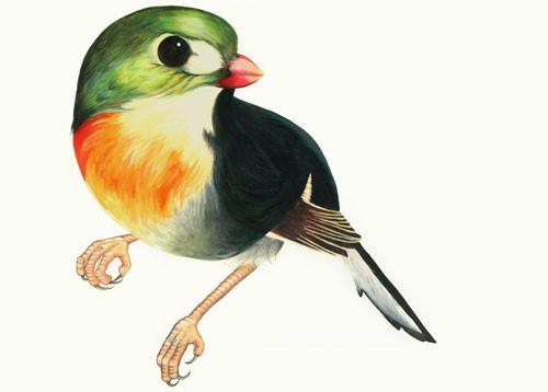 Birds Of Claire. Изображение № 3.