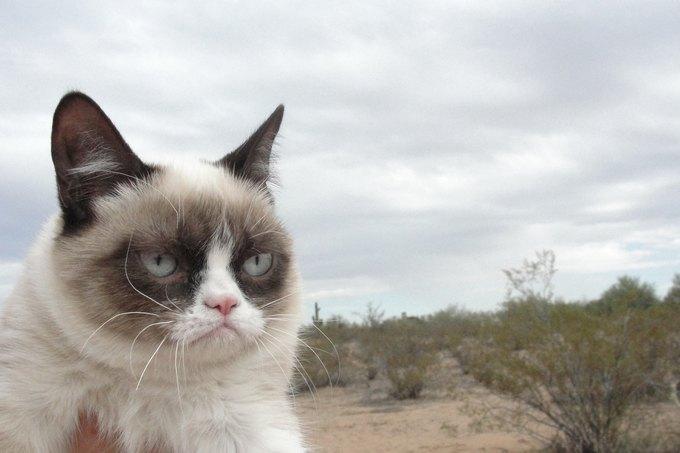 Grumpy Cat станет героем голливудского фильма. Изображение № 1.