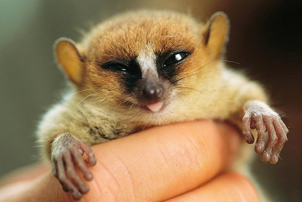 Как учёные находят новых животных: 10 недавно открытых видов. Изображение № 7.