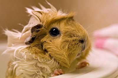 50 животных, которые ненавидят мыться. Изображение № 47.