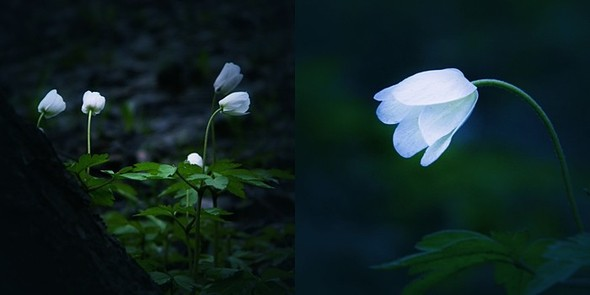 Весна в лесу. Изображение № 9.