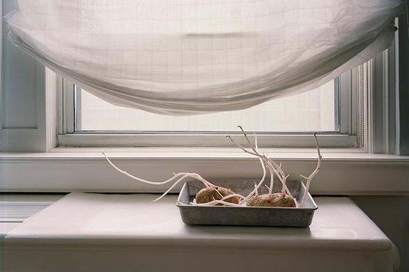 Фотография Kathryn Parker Almanas. «Неманипулированный» still life, в котором автор сознательно показывает естественность картинки. Изображение № 23.