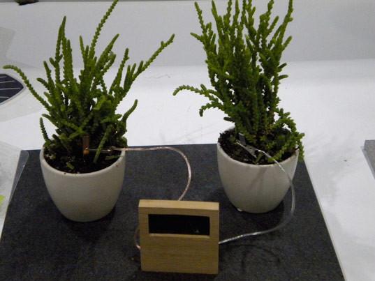 Уникальные биочасы: умрут растения – погибнет время. Изображение № 4.