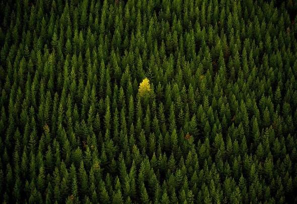 Фотоконкурс National Geographic 2010. Изображение № 10.