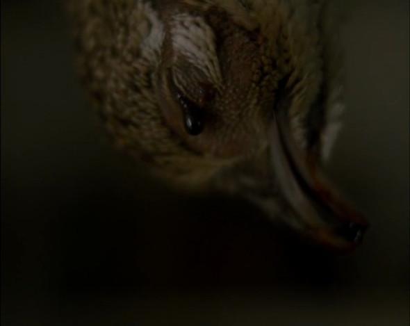 Прорыв: «Грозовой перевал» Андреа Арнольд. Изображение № 13.