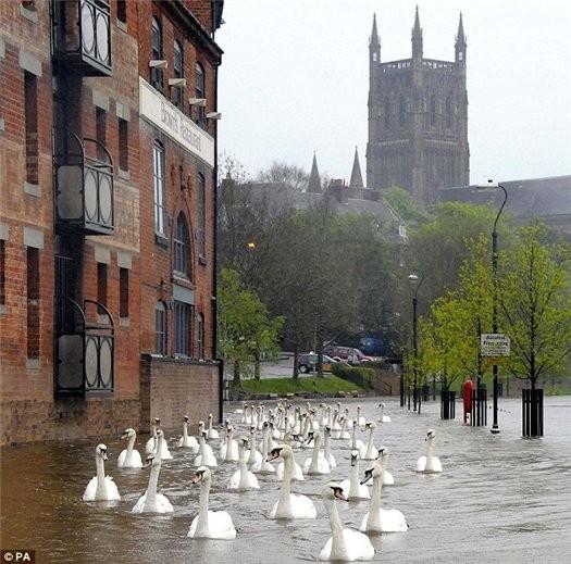 Проливные дожди срывают съемки Аббатства Даунтон. Изображение № 1.
