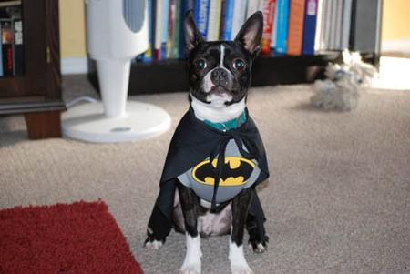 TheDaily Batman. Изображение № 10.