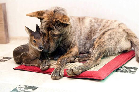 Дружба - она и у животных дружба!. Изображение № 8.