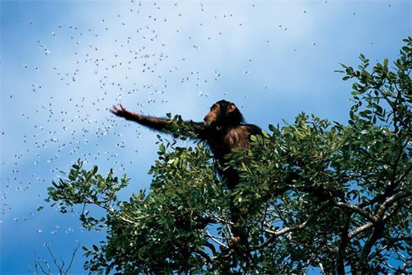 Лучшие снимки от National Geographic. Изображение № 28.