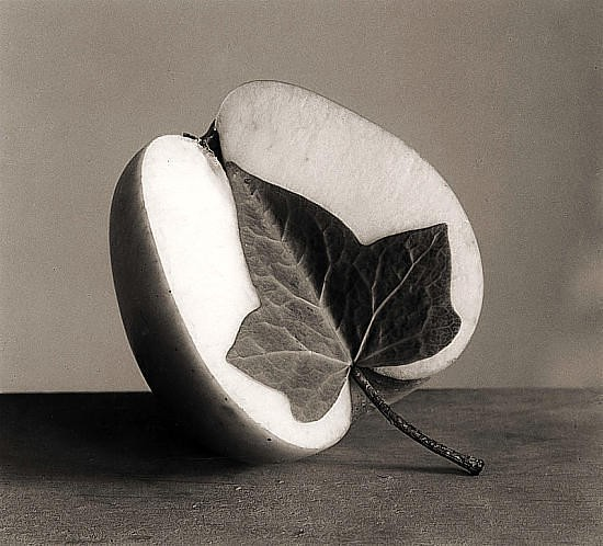 Черно-белые сюрреалистические фотографии Chema Madoz. Изображение № 8.