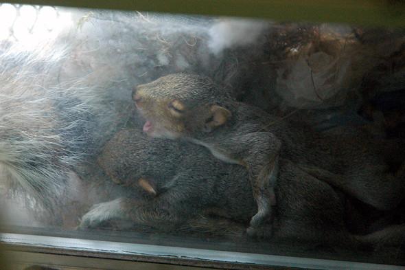 Белка в нашем окне. Изображение № 8.