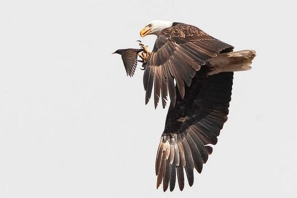 Лучшие новые снимки от National Geographic. Изображение № 52.