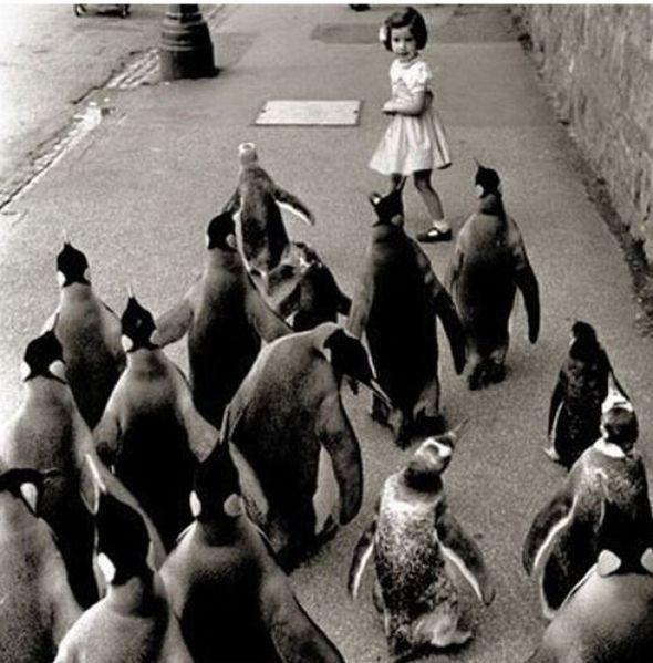 """""""Пингвины атакуют"""". Изображение № 6."""